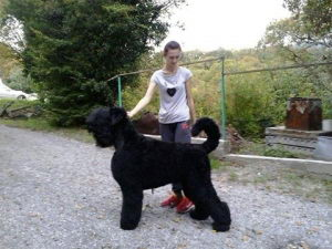 Black Russian Terrier MELODIYA VESNY VA BANK photo№2