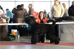 Black Russian Terrier TSIARILADA ARCHIBALD photo№2