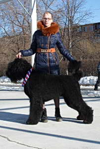 Black Russian Terrier GLAFIRA DOROFEEVNA photo№2