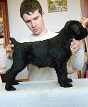 Puppies for sale Puppies black terrier  ,  miniature schnauzer  white MELODIYA VESNY VOORUJEN I OPASEN * ARIYALETTA